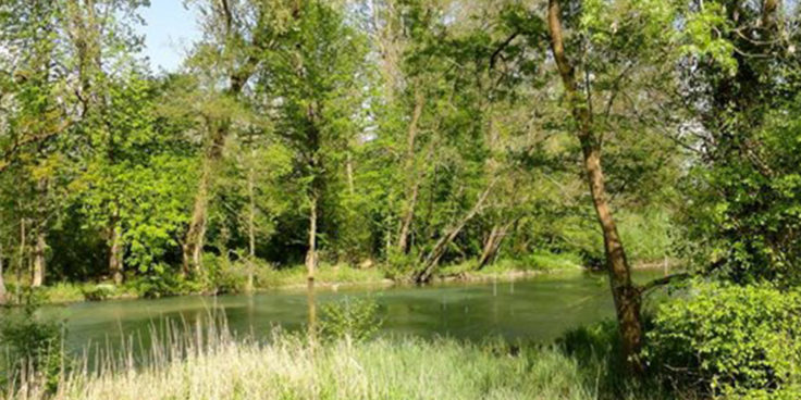 Acquario di Ariis thumbnail
