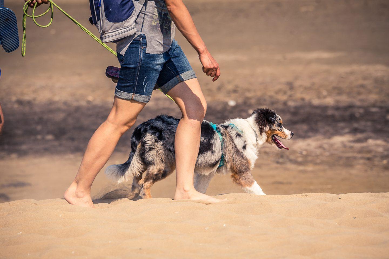 vacanza con i cani