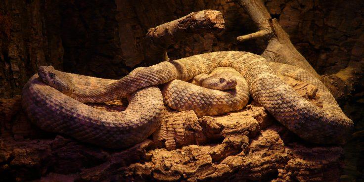 Taygor Live Reptiles thumbnail