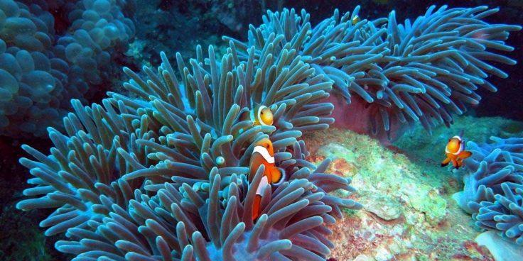 Sea Life thumbnail