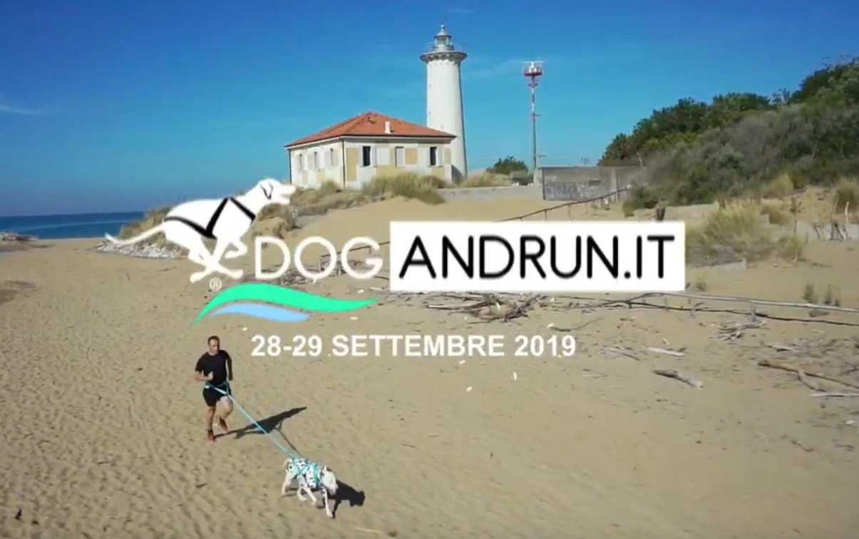 Dog and Run 2019
