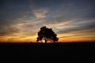 #instagram #instanday #bestday #foto #photography #sempreingiro #bellaitalia #sole #bellavista #sunset #sunrise_sunsets_aroundworld #scattirubati #scatti_italiani #sky #fotografia #bestshot #tramonti_italiani #tramonto #bibione #bibioneeu #visitbibione #mylife #tramonti#skylovers #skypornpics #bestoftheday #skycolors