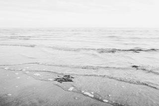 Voyager . #bibione #beach , #italy . . . . . . #visitveneto #visitbibione #bibione2018 #landscape #landscapephotography #landscape_lovers #travel #travelgram #traveladdict #instatravel #instago #bw #blackandwhitephoto #leaves #igworldclub #igersitalia #igers #browsingitaly #canon #photooftheday #photography