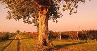 Questo weekend abbandonati a un affascinante viaggio tra i vigneti per un'esperienza di spirito. Esplora la Strada dei Vini D.O.C. Lison Pramaggiore, un percorso enologico–culturale caratterizzato da splendidi paesaggi, incantevoli cantine e paesaggi incontaminati.  #bibione #visitbibione #holiday #bibione2017 #autumn2017 #weekendvibes #lisonpramaggiore  Dieses Wochenende verlassen Sie sich auf eine faszinierende Reise durch die Weinberge für einen Geist Erfahrung. Erkunden Sie die Weinstraße QbA Lison Pramaggiore, eine Wein-kulturelle Strecke, die durch wunderschöne Landschaften, bezaubernde Weingüter und unberührte Landschaften charakterisiert ist.  This weekend abandon yourself to a fascinating journey through the vineyards for a spirit experience. Explore the Wine Route AOC Lison Pramaggiore, a wine-cultural route characterized by beautiful landscapes, enchanting wineries and unspoilt landscapes.
