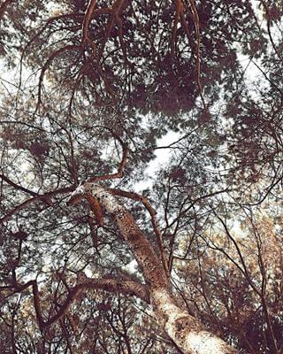 Natura, intrecci, armonie e incastri. Le Terme di Bibione sono (anche) questo . . . . #lemieterme #terme #termebibione #bibione #bibionethermae #thermae #natura #nature #relax #wellness #benessere #corpoemente #wild #albero #alberi #autumn #autunno #fall #foglie #discoverbibione #igersbibione #igersveneto #visitbibione #picoftheday