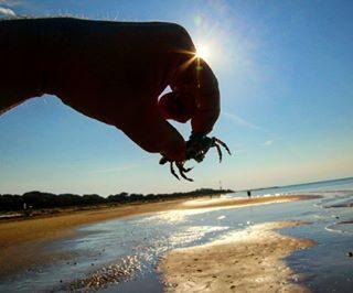 Bibione, invasione di granchi ieri mattina sulla spiaggia  verso il faro #bibionefaro  #bibione  #visitbibione  #veneto_super_pics  #uaufvg  #yalersitalia  #ig_captures  #bestpic #nature #community_queen  #turklikeben #granchio  #natura_love_  #mareadriatico  #granchi