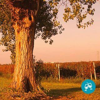 Immergiti in un affascinante percorso enologico-culturale tra paesi, vigne, cantine e paesaggi incontaminati dove il vino è il protagonista indiscusso. Inizia un viaggio tra i vigneti per un'esperienza di spirito! 🍷  #bibione #visitbibione #bibione2018 #discoverbibione #autunno #autunno2018 #autumn #falltime #winelovers #wineoclock #wineblog #enoblogger #italianwine #sommelierlife #tasting  Tauch ein in einen faszinierenden önologisch-kulturellen Weg zwischen Ländern, Weinbergen, Weingütern und unberührten Landschaften, in denen der Wein der unbestrittene Protagonist ist. Start eine Reise durch die Weinberge für ein Geist Erlebnis! 🍷  Immerse yourself in a fascinating oenological-cultural path between countries, vineyards, wineries and unspoiled landscapes where wine is the undisputed protagonist. Start a journey through the vineyards for a spirit experience! 🍷